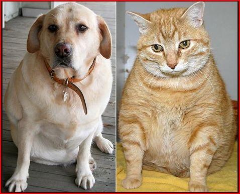 fat dog fat kitten